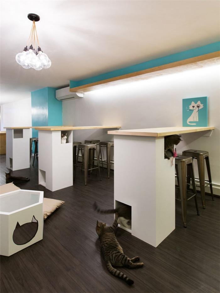 纽约首家宠物主题咖啡馆设计 猫咪咖啡馆设计说明